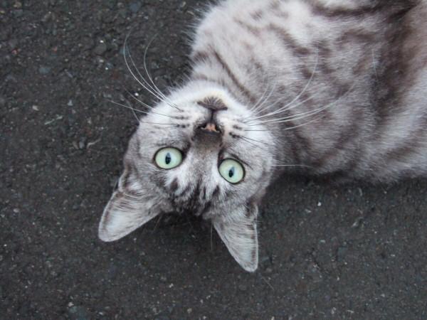 http://cinesperienza.altervista.org/varie/cats/japan06/neko04.jpg