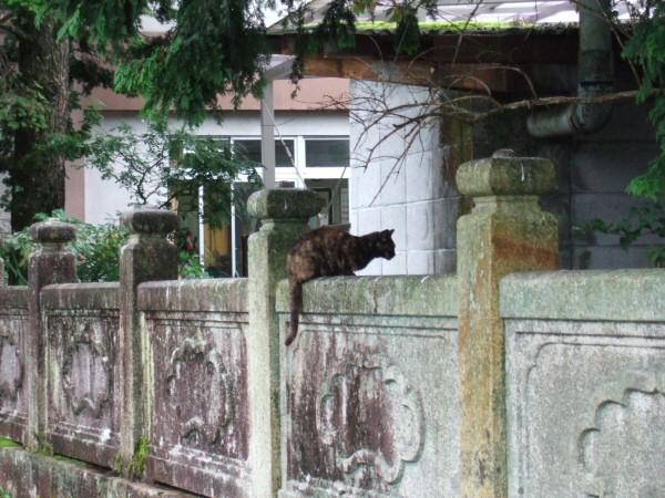 http://cinesperienza.altervista.org/varie/cats/japan06/neko07.jpg