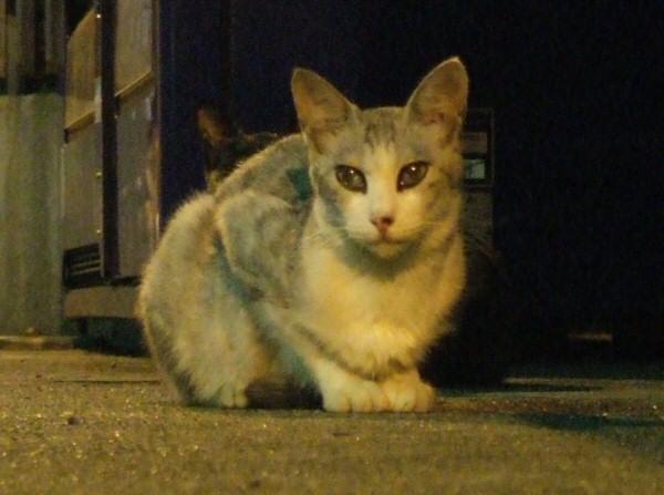 http://cinesperienza.altervista.org/varie/cats/japan06/neko11.jpg