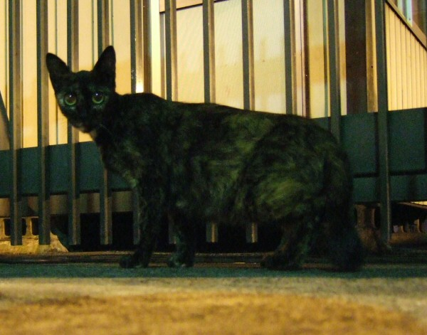 http://cinesperienza.altervista.org/varie/cats/japan06/neko13.jpg