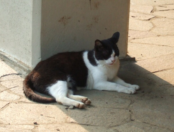 http://cinesperienza.altervista.org/varie/cats/japan06/neko15.jpg