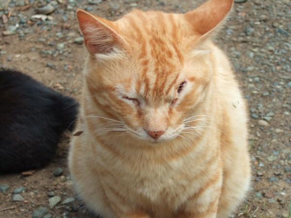 http://cinesperienza.altervista.org/varie/cats/japan06/neko17.jpg