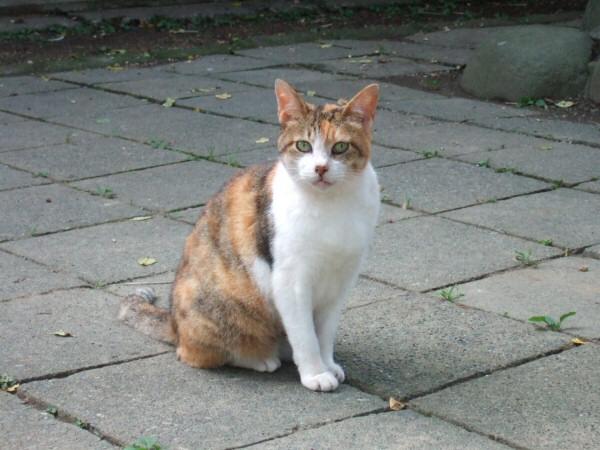 http://cinesperienza.altervista.org/varie/cats/japan06/neko20.jpg