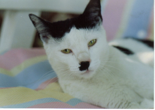 http://cinesperienza.altervista.org/varie/cats/kitler06.jpg