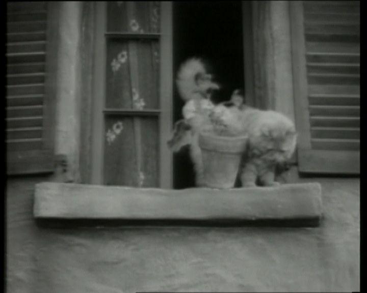 http://cinesperienza.altervista.org/varie/gatto_luci.jpg